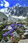Цветы бжедуха