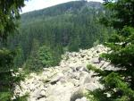 Лес и камни